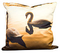 Swans Photo Cushion